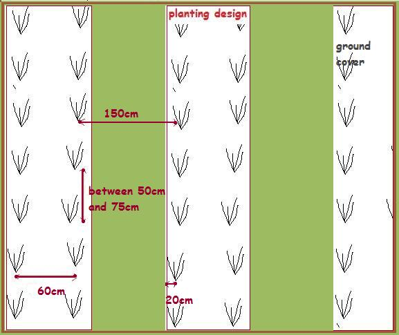 planting diagram